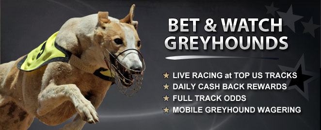 Greyhound Racing Betting Online Off Track Betting